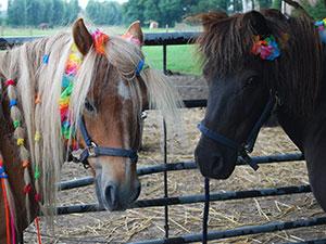 Kakelbont Paarden